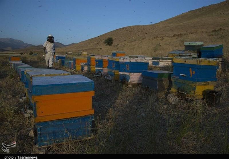 تصویر زنبورداران کاشانی از نبود خدمات بیمهای و دامپزشک رنج میبرند