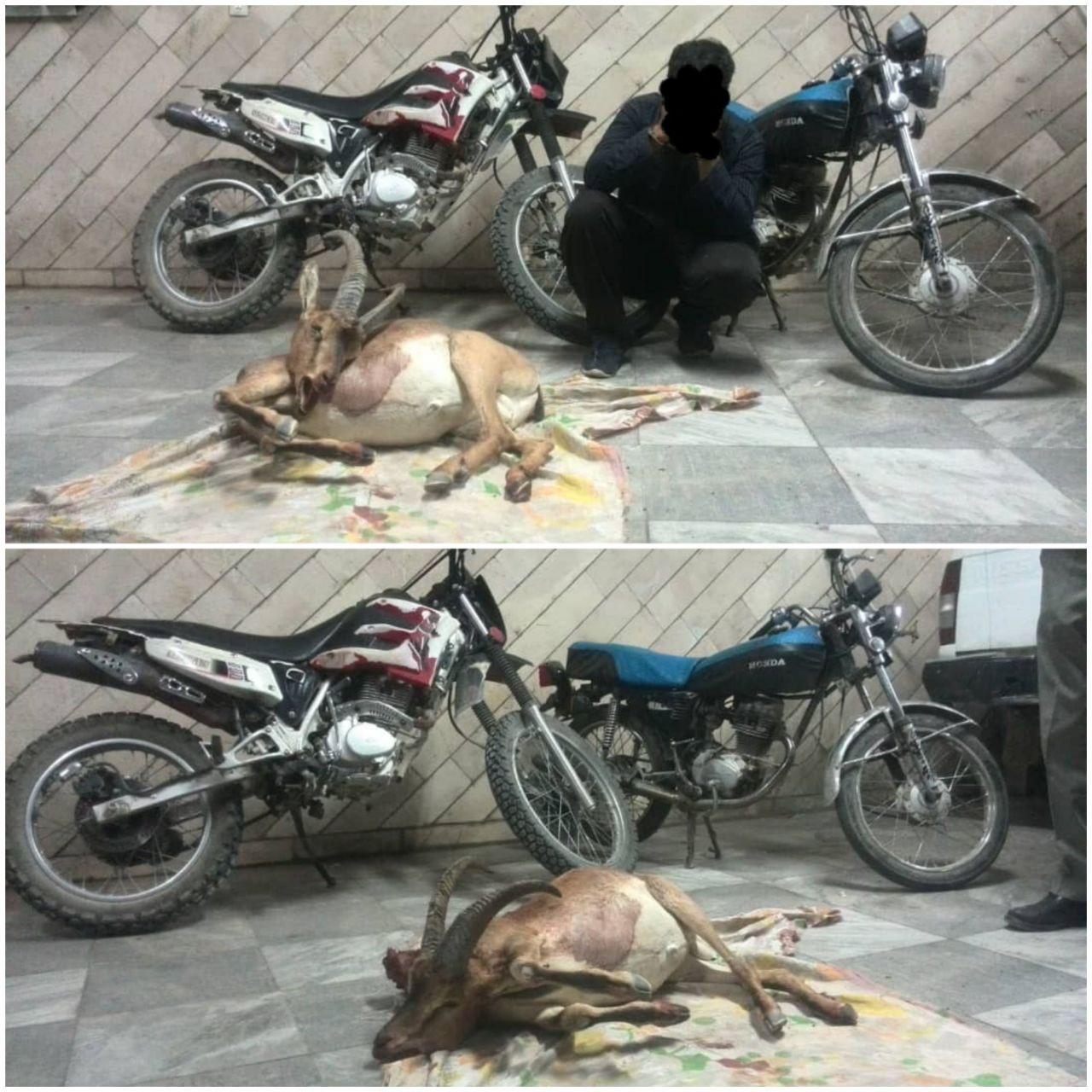 تصویر دستگیری متخلفین باسابقه شکار و صید در کاشان