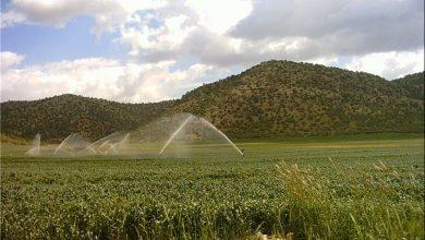 تصویر کیفیت پایین آب کاشان مانع تجهیز اراضی به آبیاری نوین است