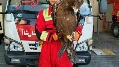 تصویر زنده گیری عقاب توسط آتش نشانان کاشانی